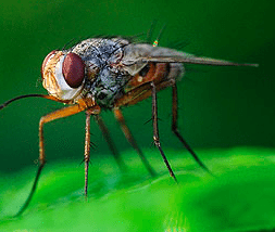 TOP TEN WAYS TO AVOID VIOLATIONS AND GET YOUR RESTAURANT READY FOR FLY SEASON
