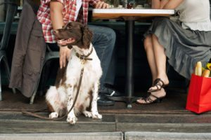 Dining with Service and Companion Dogs